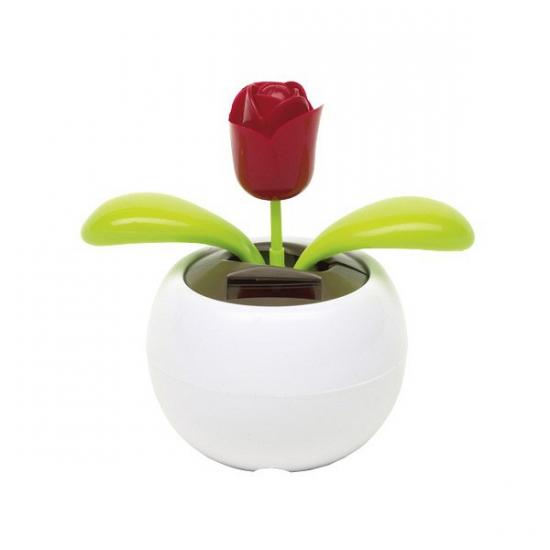 Funny bloem zonne energie roos