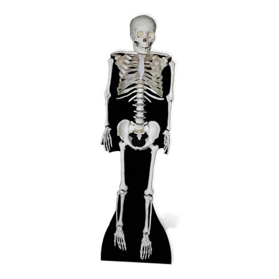 Halloween Groot decoratie bord skelet