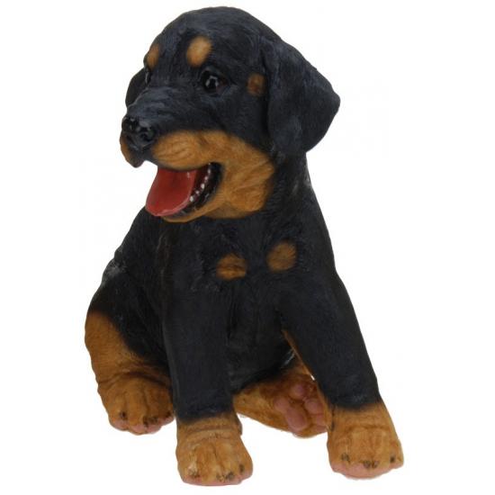 Honden beeldje zittende Rottweiler puppy 23 cm