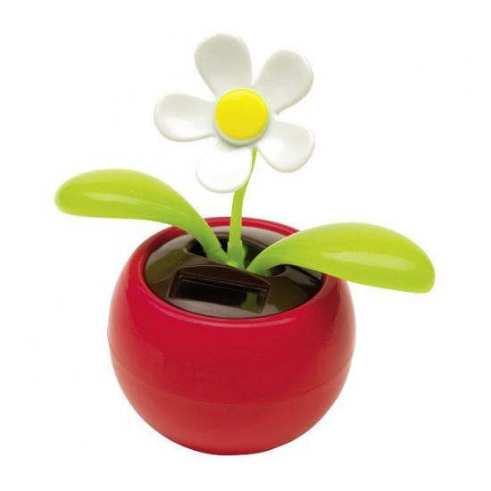 Margriet bloem op zonne energie