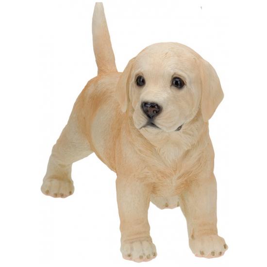 Staande Labrador puppy van polystone 29 cm