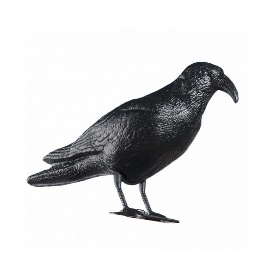 Vogelverschrikker raaf
