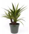 Aloe ferox kunstplant in pot 71 cm