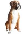 Beeld boxer hond 47 cm