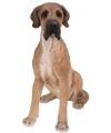 Beeld bruine deense hond 36 cm