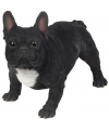 Beeld franse bulldog hond 33 cm