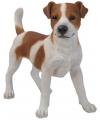 Beeld jack russel terrier bruin wit 35 cm