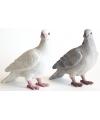 Beeldje grijze duif 20 cm