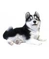 Beeldje liggende husky hond 20 cm