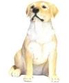 Beeldje zittende blonde labrador hond 21 cm