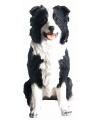 Beeldje zwarte border collie hond 26 cm