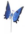 Blauwe vlinder op stok 59 cm