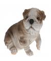 Bulldog beeldje zittend 16 cm type 1