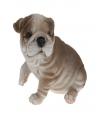 Bulldog beeldje zittend 16 cm type 3
