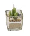 Cactus kaarsje in glas 5 cm