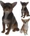 Chihuahua beeldje bruin 22 cm