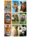 Dieren 3d sticker set
