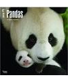 Dieren kalender 2018 panda