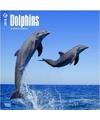 Dieren kalender dolfijnen 2018