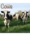 Dieren kalender koeien 2018