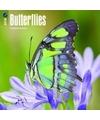 Dieren kalender vlinders 2018