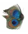 Haarbloem pauwveertjes groen blauw