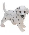 Honden beeldje staande dalmatier puppy 29 cm