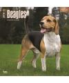 Honden kalender 2016 beagle