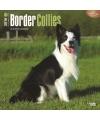Honden kalender 2016 border collie
