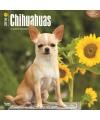 Honden kalender 2016 chihuahua