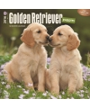 Honden kalender 2016 golden retriever