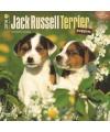Honden kalender 2016 jack russell