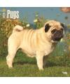 Honden kalender 2016 mopshond