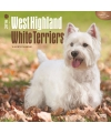 Honden kalender 2016 west highland terrier