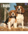Honden kalender 2017 beagle