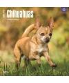 Honden kalender 2017 chihuahua