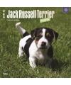 Honden kalender 2017 jack russell pups