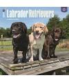Honden kalender 2017 labradors