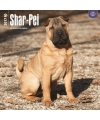 Honden kalender 2017 shar pei