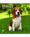 Honden kalender 2018 beagles