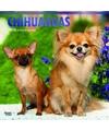 Honden kalender 2018 chihuahuas