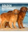 Honden kalender 2018 golden retrievers