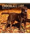 Honden kalender 2018 labrador retrievers bruin