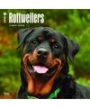 Honden kalender 2018 rottweilers