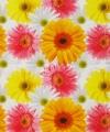 Inpakpapier bloemen print 14