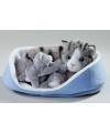 Katten en kittens knuffels grijs