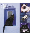 Katten kalender 2017 cat lovers
