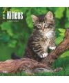 Katten kalender 2017 kittens