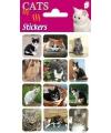 Katten stickers 3 vellen