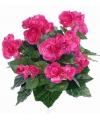 Kunst begonia roze 30 cm